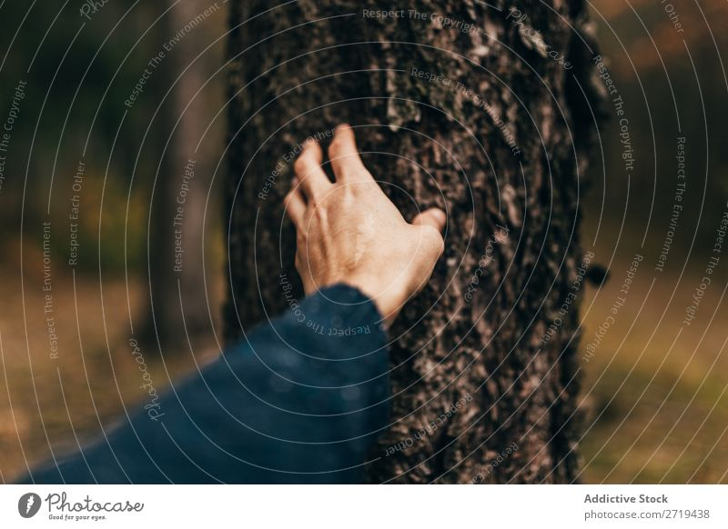 Crop man touching tree bark Man Harmonious Consistency Rough Touch Forest Nature Barque