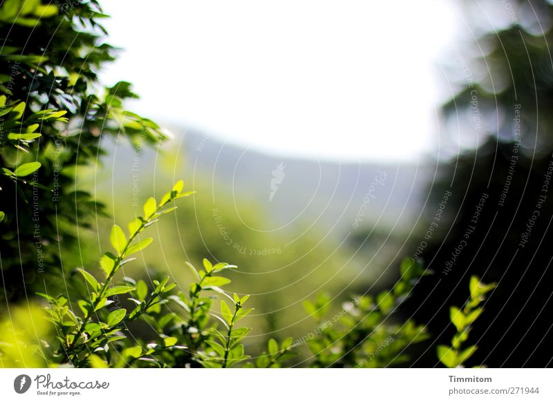 let go of sb./sth. Environment Nature Plant Sky Spring Bushes Leaf Box tree Outskirts Looking Growth Esthetic Friendliness Gray Green Emotions Contentment Calm