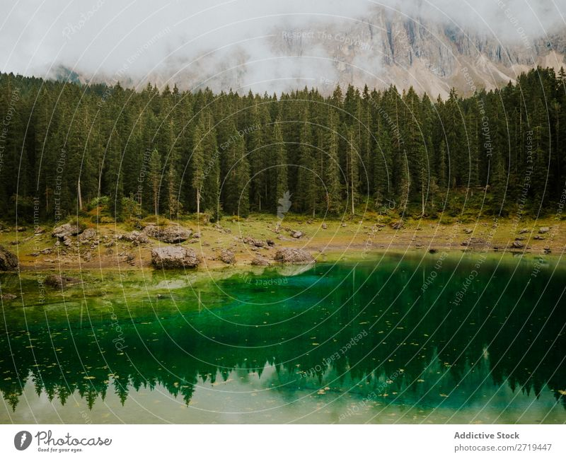 Landscape with ever-green trees in Dolomites, Italy Pond Mountain Reflection Evergreen Calm Mirror