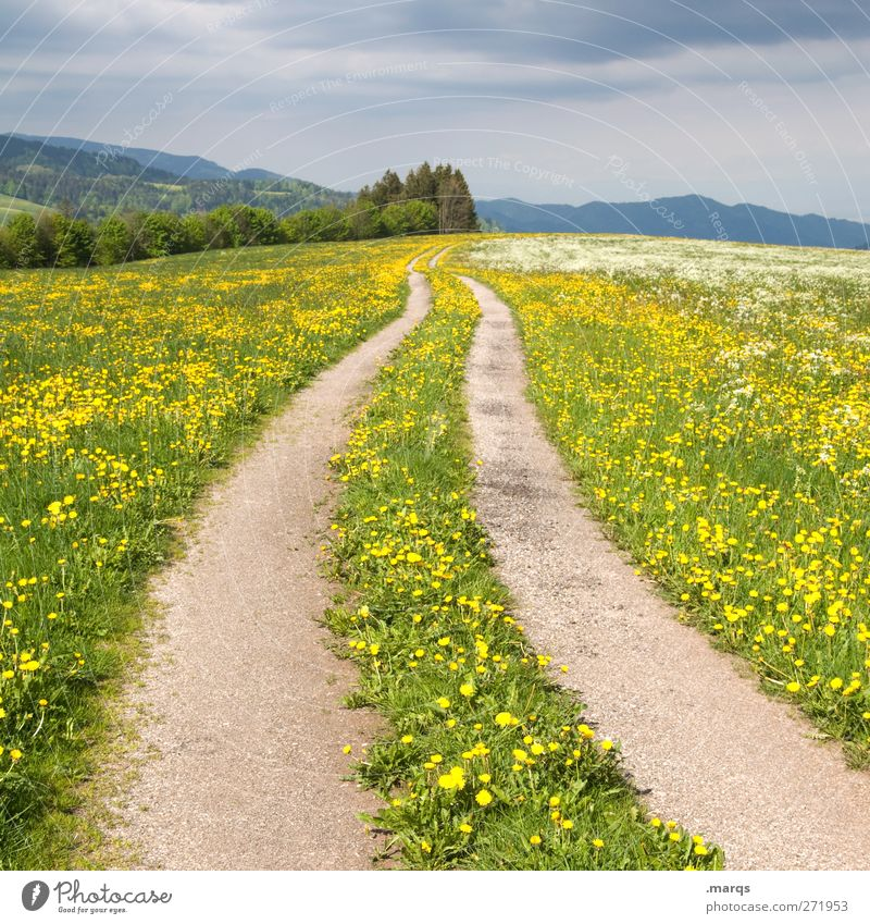 a way out Environment Nature Landscape Summer Storm Flower Dandelion field Meadow Transport Traffic infrastructure Street Lanes & trails Sign Blossoming