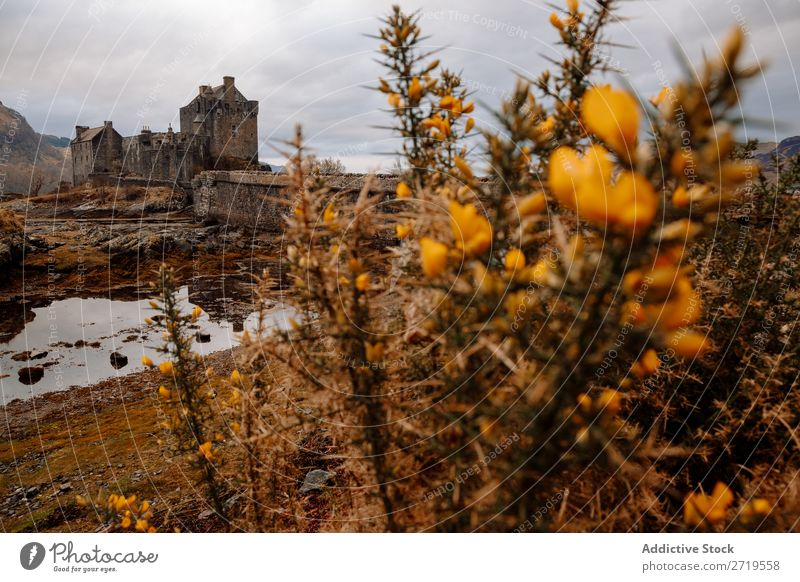 Flowers and castle view Plant Castle Coast Rock Lake Hill Mountain Landscape Nature Water Natural Stone Old Historic Beautiful Clouds Scotland Grass