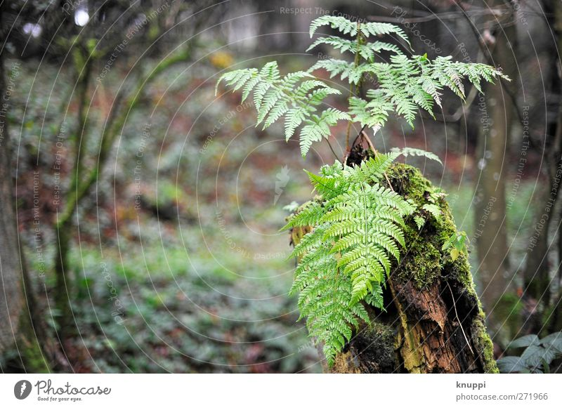 Rain Forest Environment Nature Plant Elements Water Clouds Sunlight Summer Weather Bad weather Tree Bushes Moss Ivy Fern Foliage plant Wild plant Hill Growth