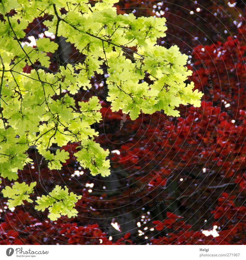 Nature Plant Green Beautiful Red Leaf Calm Spring Natural Exceptional Park Illuminate Growth Fresh Authentic Esthetic