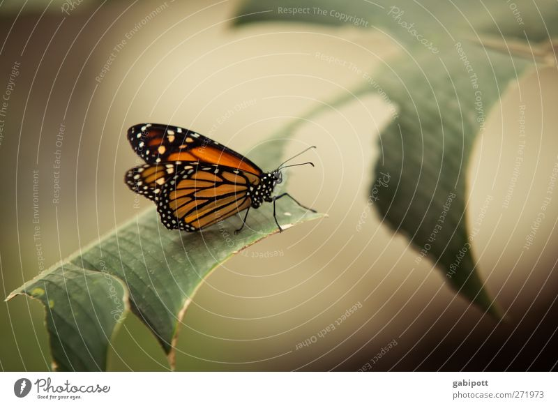 Nature Green Beautiful Plant Animal Calm Brown Orange Contentment Sit Natural Esthetic Wing Uniqueness Butterfly Fragrance
