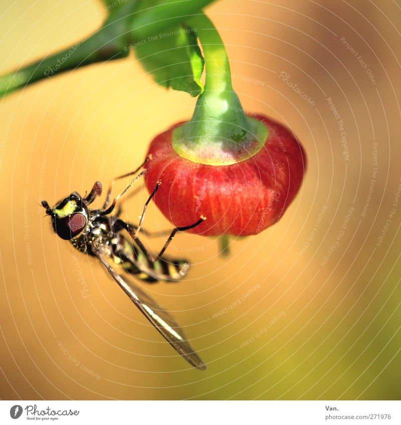 Nature Red Plant Animal Leaf Yellow Warmth Spring Garden Bright Wild animal Wing Bee Insect Stalk Berries