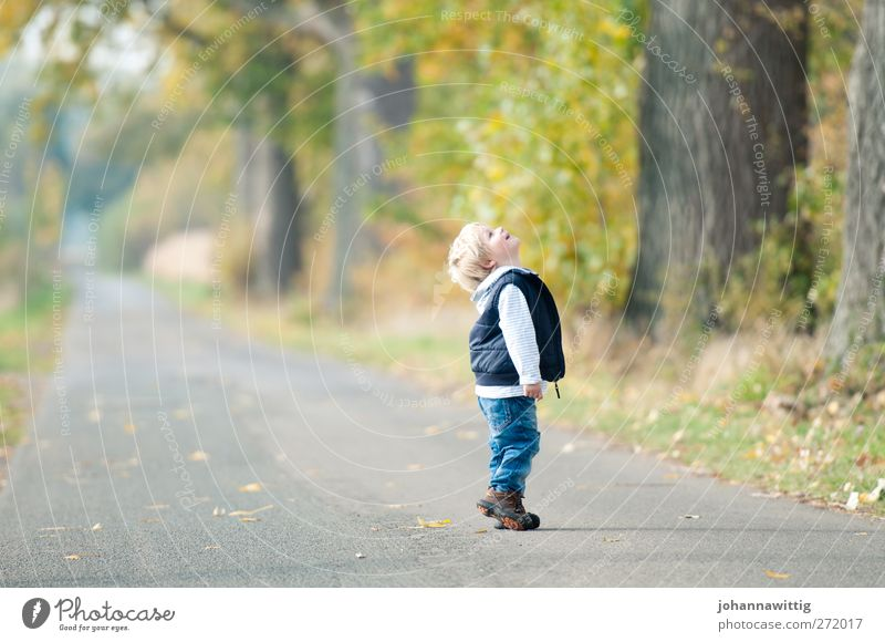 Human being Child Nature Green Tree Flower Joy Environment Autumn Grass Happy Blonde Infancy Masculine Happiness Bushes