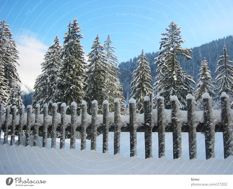 winter magic Fence Winter Fir tree Tree Switzerland Cold Snowscape Mountain Sky