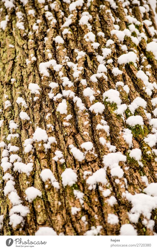 oak, bark with snow Winter Plant Weather Snow Tree Brown White Oak tree snowy Season Crack & Rip & Tear Close-up flora Germany Alpina snowcap Colour photo
