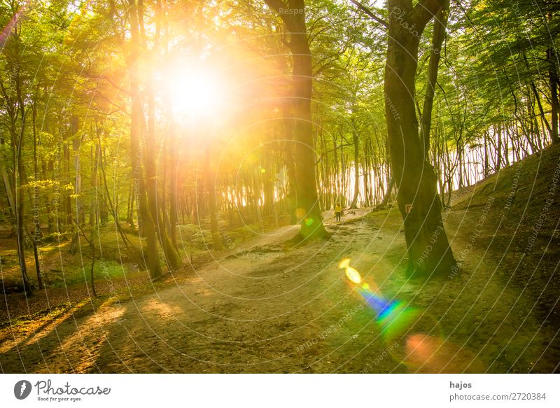 Forest at the Baltic Sea coast in Poland in back light Nature Beautiful weather Moss Coast Bright Green Back-light Sunbeam Reflection Deciduous forest Dune