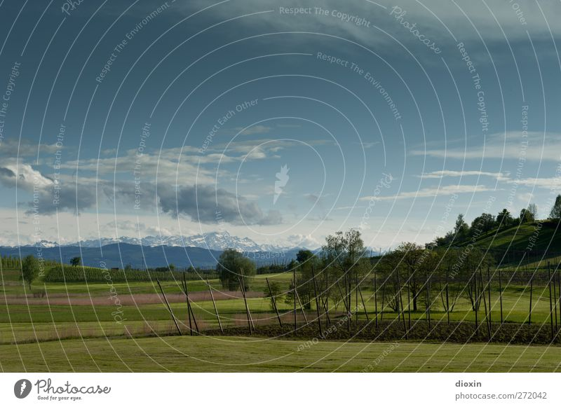 Landscape with hop field Agriculture Forestry Environment Nature Plant Sky Clouds Spring Tree Grass Agricultural crop Hop Meadow Field Hill Alps Mountain
