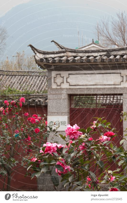 ChinaGarden Plant Flower Rose Leaf Blossom Exotic Park Deserted Gate Esthetic Exceptional Positive Beautiful Adventure Idyll Chinese Garden Horticulture Archway
