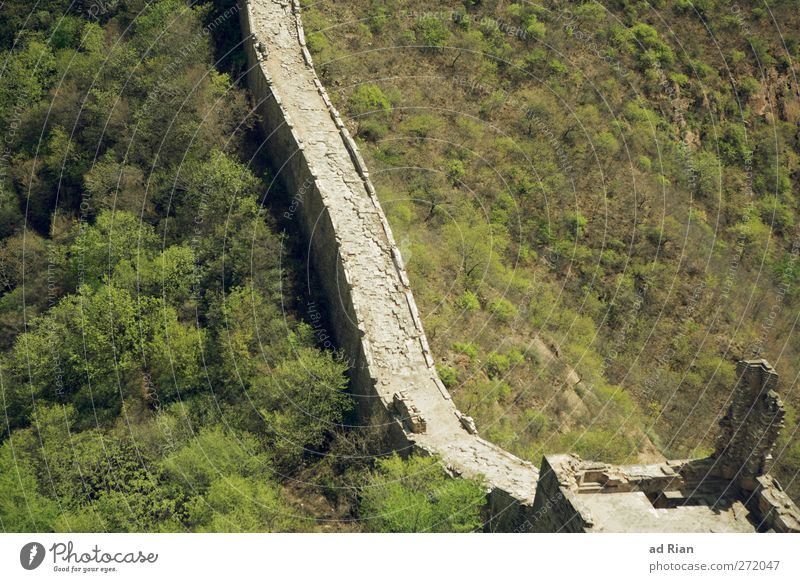 Large wall (small section) Nature Landscape Spring Beautiful weather Tree Grass Bushes Forest Hill China Ruin Gate Manmade structures Architecture