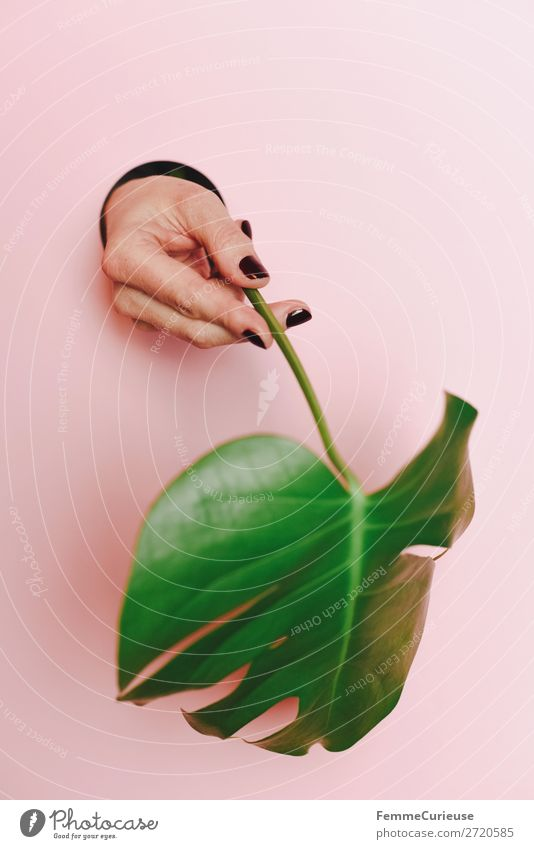 Hand of a woman holding a monstera leaf Feminine 1 Human being Nature Plant Monstera Leaf Foliage plant Love of nature Environmental protection Pink To hold on
