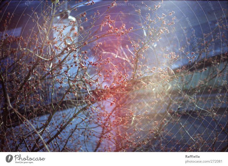 splendour Tree Roof Chimney Soft Branch Twig Branchage Leaf bud Reflection Colour photo Exterior shot Deserted Light (Natural Phenomenon) Sunlight Sunbeam
