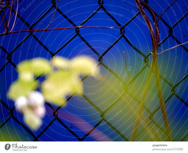 Blue Plant Loneliness Calm Yellow Wall (building) Wall (barrier) Sadness Dream Fear Signs and labeling Growth Bushes Gloomy Hope Threat