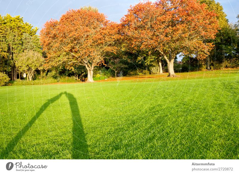 Shadows kissing Vacation & Travel Garden Valentine's Day Human being Woman Adults Man Couple Nature Landscape Autumn Tree Grass Kissing Love Happiness Natural
