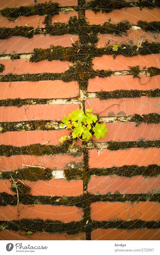 Old Green Red Plant Summer Wall (building) Spring Wall (barrier) Growth Change Hope Transience Brick Serene Moss Seam