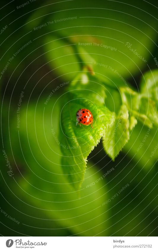 Nature Green Beautiful Red Plant Animal Leaf Happy Fresh Esthetic Idyll Beautiful weather Branch Friendliness Positive Beetle