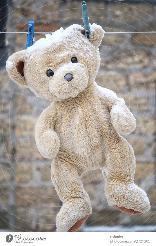 old teddy bear hanging on a clothesline Joy Winter Snow Child Toys Teddy bear Line Old Playing Fresh Cute Retro Clean Brown White Loneliness Bear Washing wash