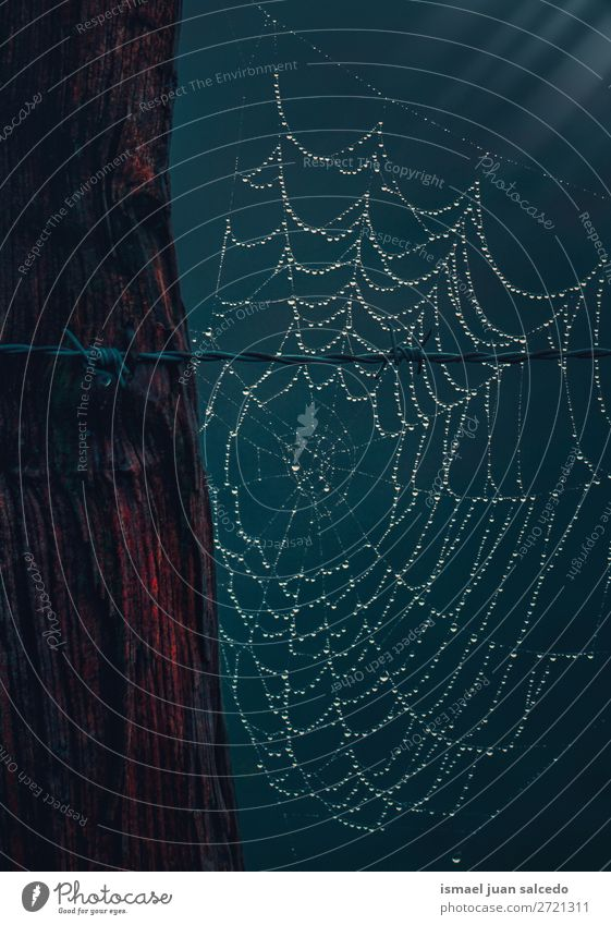 drops on the spider web Nature Bright Glittering Protection Drop Internet Fence Safety (feeling of) Spider's web Barbed wire Wire fence