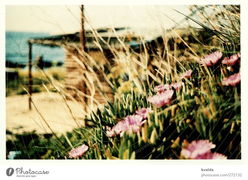 Nature Water Vacation & Travel Green Plant Summer Ocean Calm Relaxation Grass Blossom Brown Pink Island Trip Hill