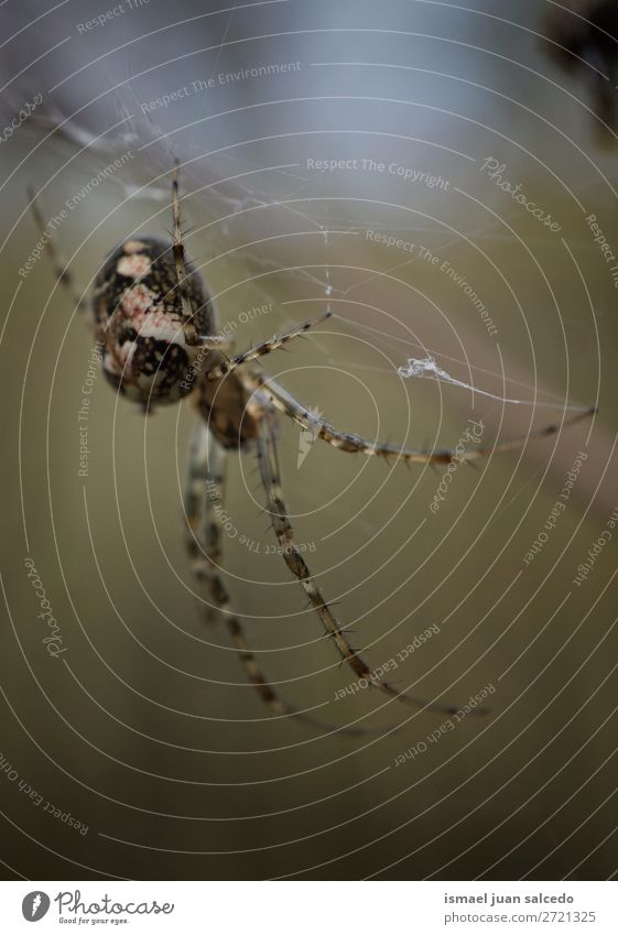 spider on the spider web Spider Spider's web Internet Insect Bug Wing Animal Plant Flower Garden Nature Exterior shot background Beauty Photography fragility