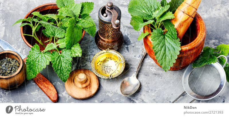 Melissa leaf or lemon balm melissa herb herbal medicine herbalism plant natural healthy green fresh tea nature aromatic mint aromatherapy medical alternative