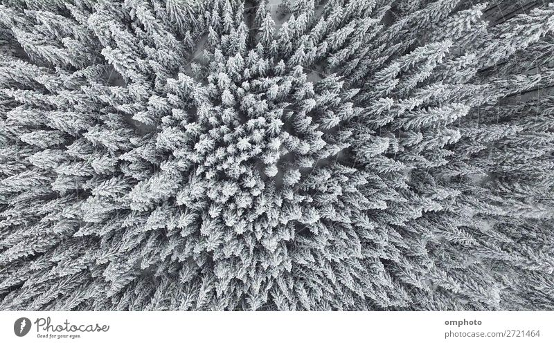 Frozen Pine Forest From the Air Winter Snow Mountain Nature Landscape Plant Weather Ice Frost Tree Fresh White pines Scene Top over image Vantage point cold