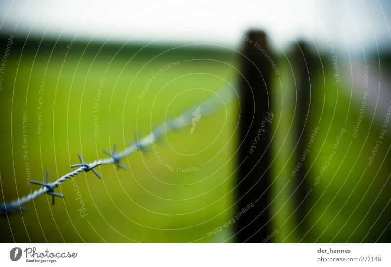 barbed wire Nature Landscape Horizon Grass Garden Meadow Field Metal Sign Thorny Pain Barbed wire fence Pasture Colour photo Multicoloured Exterior shot