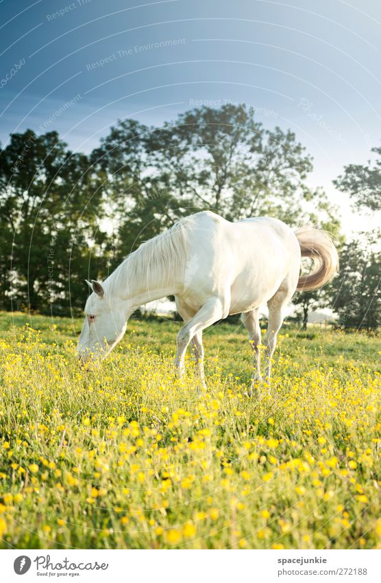 Sky Nature White Tree Plant Flower Animal Environment Landscape Yellow Meadow Blossom Natural Cute Horse Individual