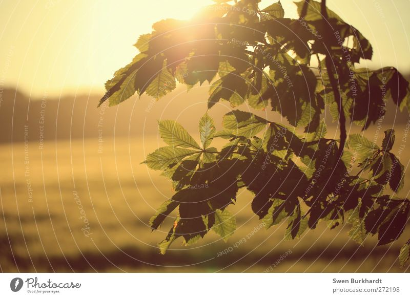 Nature Plant Green Summer Sun Landscape Leaf Environment Yellow Spring Autumn Air Field Growth Gold Climate