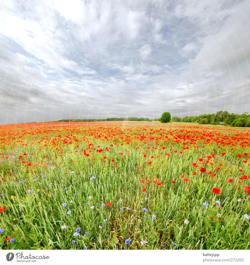 hay fever with chickenpox Environment Nature Landscape Plant Animal Sky Clouds Horizon Summer Climate Weather Beautiful weather Tree Flower Grass Wild plant