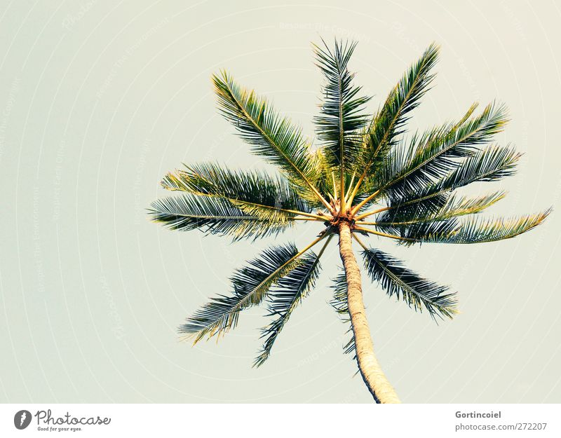 Bali Palm Cloudless sky Summer Beautiful weather Plant Tree Wanderlust Palm tree Vacation & Travel Vacation photo Palm frond Summery Vacation mood Colour photo