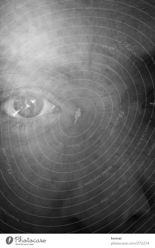 near Human being Feminine Woman Adults Life Eyes Eyelash 1 Looking Glittering Emotions Sadness Concern Grief Direct Near Black & white photo Interior shot