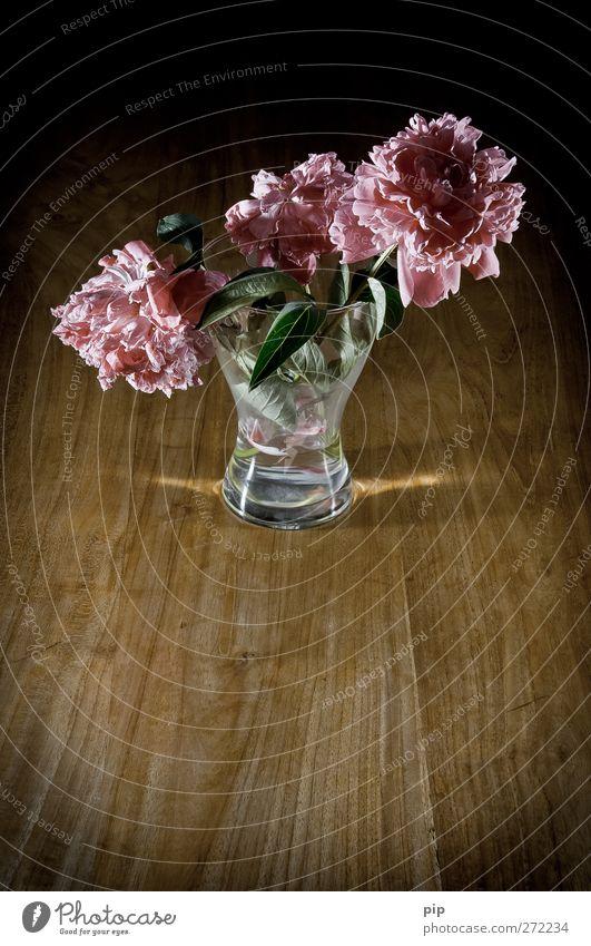 Old Flower Leaf Calm Dark Wood Blossom Sadness Glass Pink Esthetic Grief Transience Delicate Still Life Limp