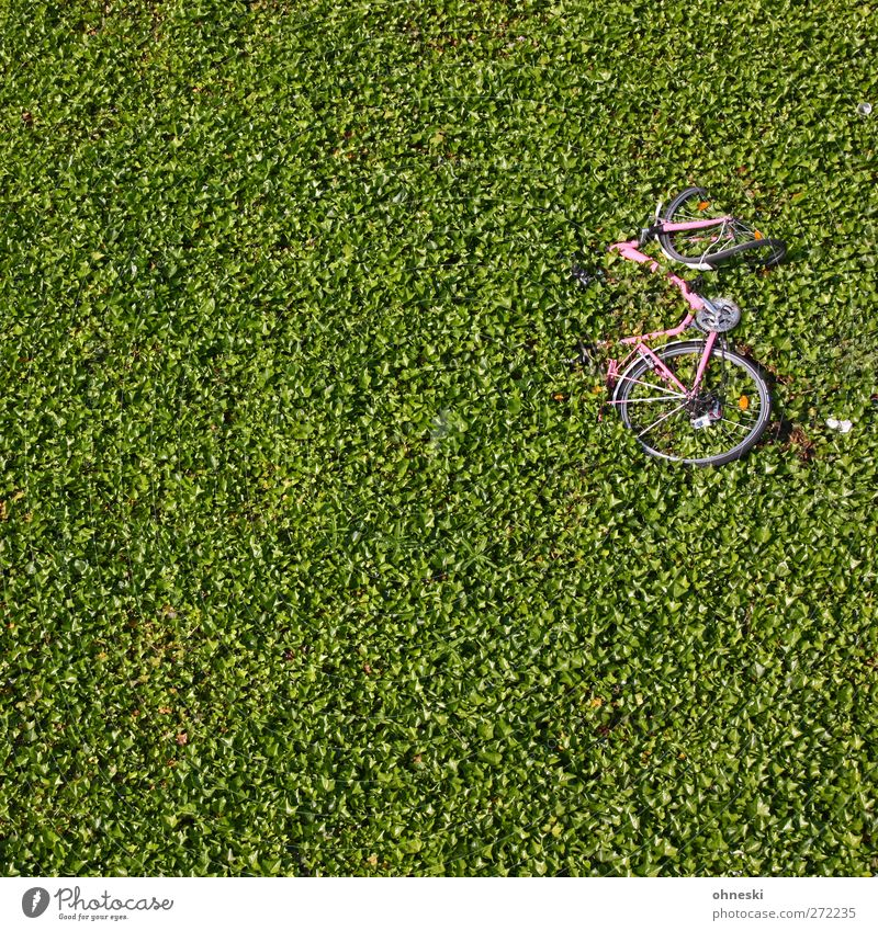 750 - The wheel... Plant Leaf Foliage plant Ground cover plant Hedge Cycling Bicycle Broken Green Accident Colour photo Exterior shot Structures and shapes