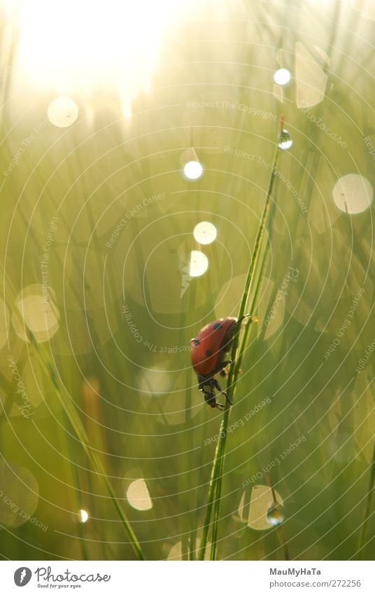 Ladybug Nature Water Plant Sun Animal Mountain Movement Grass Spring Garden Rain Waves Climate Wild animal Fly Adventure
