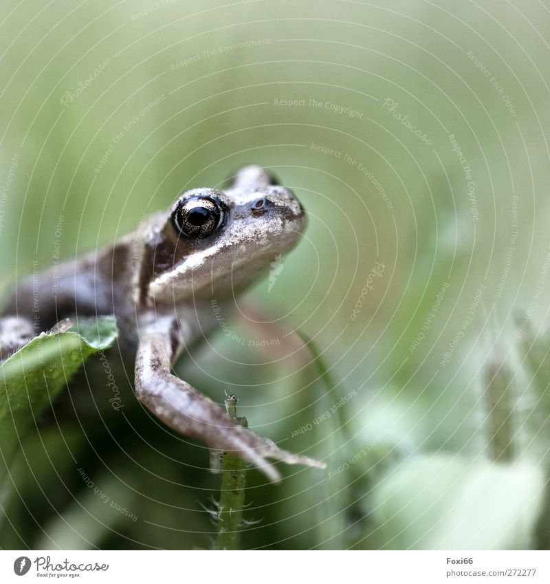 even more spring quak Air Water Spring Grass Garden Meadow Wild animal Frog 1 Animal Cold Small Natural Brown Green White Enthusiasm Love of animals Attentive