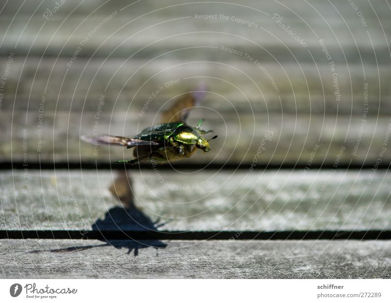 Karl takes off Animal Beetle Wing 1 Flying Glittering Green Departure Airplane takeoff Feeler Insect Runway Shadow Shadow play Exterior shot Close-up Deserted