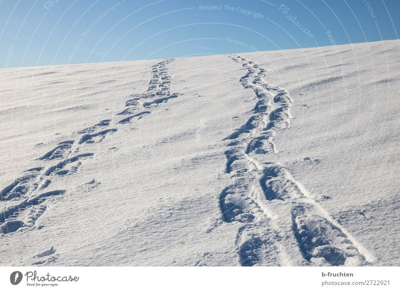 Tracks in the snow Athletic Life Well-being Winter Snow Winter vacation Hiking Sports Going Healthy Infinity Joy Contentment Freedom Nature Slope Mountain