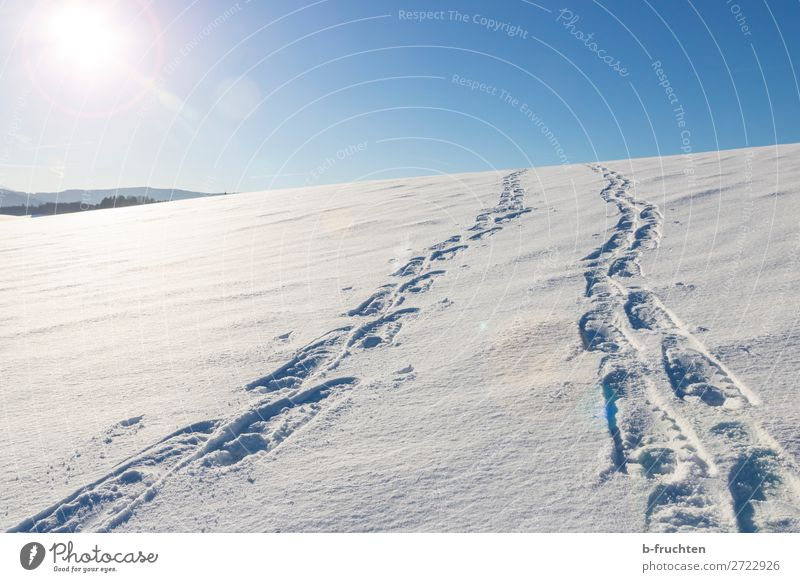 Tracks in the snow Life Leisure and hobbies Vacation & Travel Winter Snow Winter vacation Mountain Hiking Nature Going Athletic Blue Lanes & trails Footprint