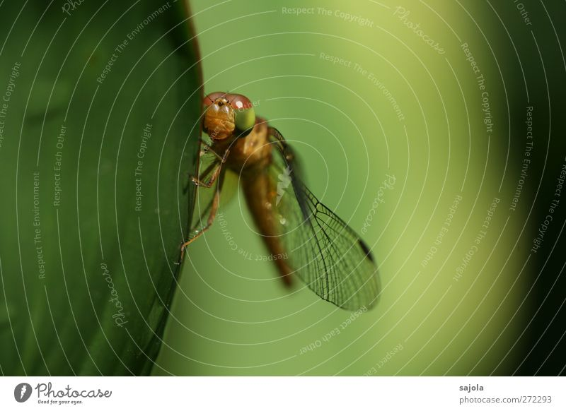 Nature Green Animal Leaf Wild animal Wait Esthetic To hold on Insect Harmonious Dragonfly