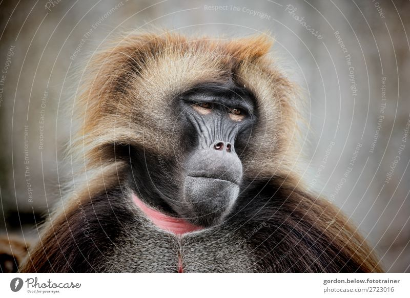 # Monkey Vacation & Travel Trip Freedom Animal monkey 1 Discover Looking Blue Brown Gray Pink Black White Contentment Cool (slang) Power Interest Adventure