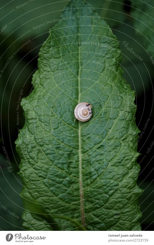 snail on the flower Animal Bug Insect Small Shell Nature Plant Garden Exterior shot fragility Cute Beauty Photography Loneliness