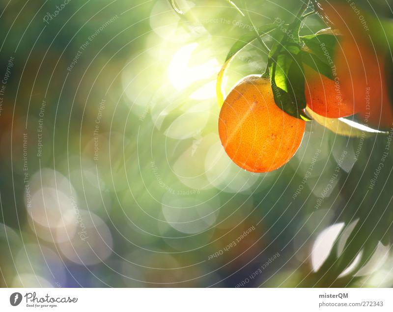 Orange Garden Nature Plant Esthetic Contentment Orange juice Orange peel Orange tree Orange plantation Orange tea Fruit Fruity Mature Hang Green Ecological