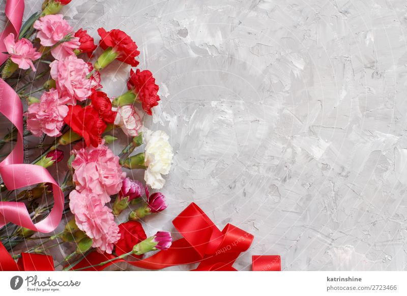 Spring background with carnations flowers and ribbons Decoration Feasts & Celebrations Valentine's Day Birthday Woman Adults Mother Flower Blossom String Love