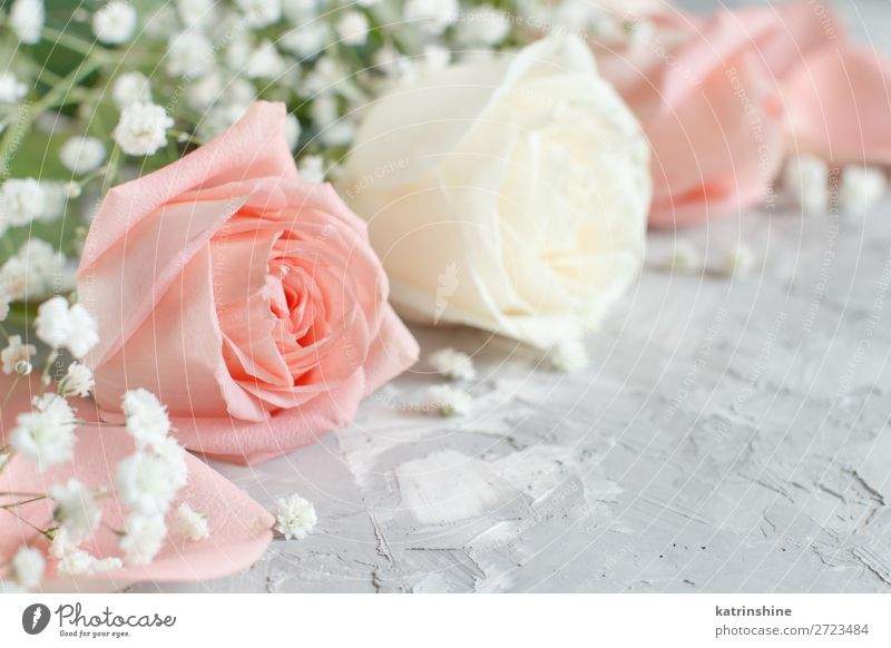 Cream and pink roses close up Beautiful Decoration Valentine's Day Wedding Woman Adults Flower Rose Blossom Wood Heart Small Gray White Neutral pastel romantic