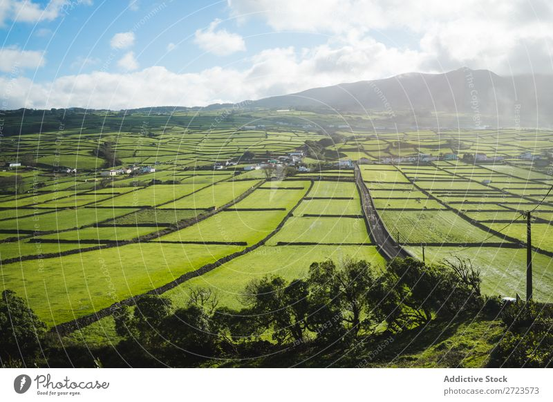 Aerial view to green fields Field Green Vantage point Nature Meadow Grass Landscape Rural Summer Plant Azores Spring Lawn Landing Environment Seasons Farm