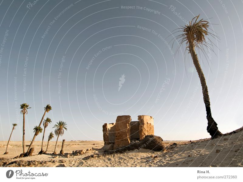 Cross and cross Vacation & Travel Tourism Summer Nature Landscape Plant Cloudless sky Autumn Beautiful weather Palm tree Desert Oasis Tunisia Ruin Hot Dry