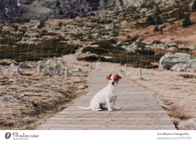 cute small dog sitting on wood floor . Autumn concept. Outdoors Nature Dog Green Animal Leaf Joy Winter Mountain Lifestyle Yellow Lanes & trails Small Wild Park